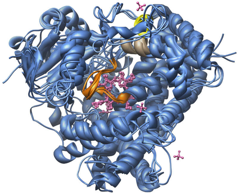 CYP3A4 ENZYME