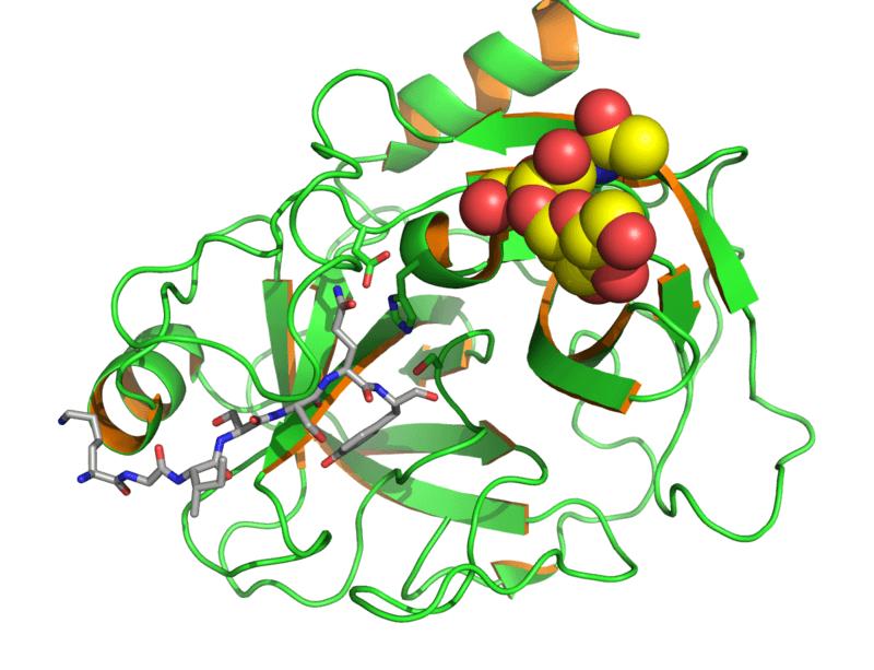 The Prostate-Specific Antigen