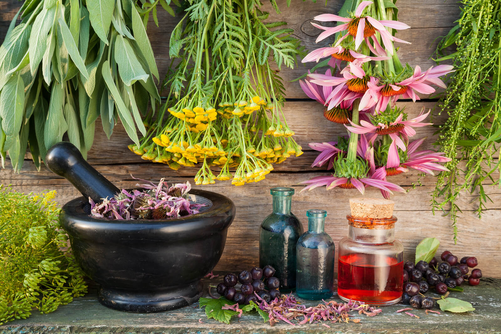 herbal-therapy-my-canadian-pharmacy